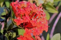 Apesar do fascismo, a primavera nos faz persistir e florescer