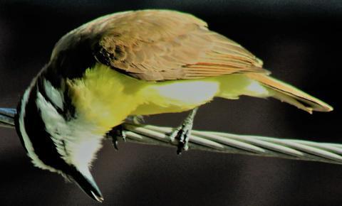Aos 12, não sabia que pássaros dormiam, mas começava a pirar tentando decifrar o sentimento humano