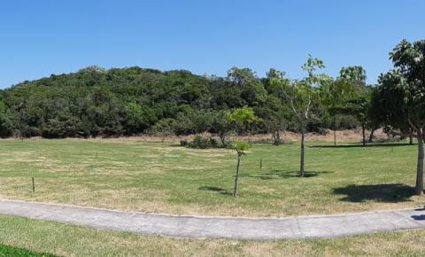 Dia da Árvore será comemorado com alto astral em Vila Velha